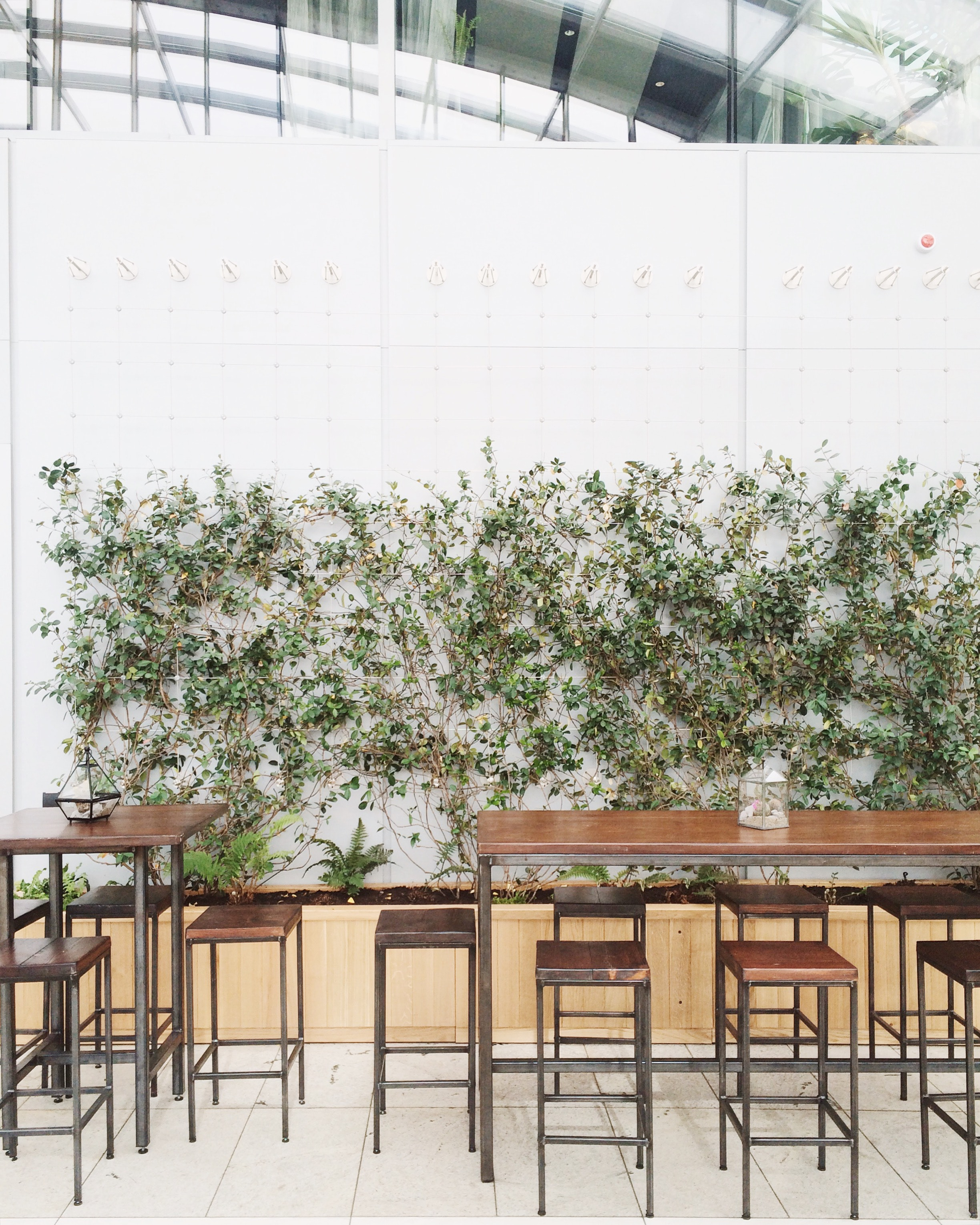 Plante-grimpante-mur-interieur
